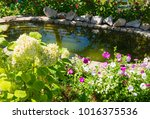 pond in  summer residence among ... | Shutterstock . vector #1016375536