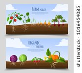 healthy food horizontal banners ... | Shutterstock . vector #1016454085