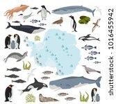 antarctic  antarctica   flora... | Shutterstock .eps vector #1016455942