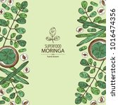 background with moringa  plant  ... | Shutterstock .eps vector #1016474356