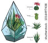 florarium with different... | Shutterstock .eps vector #1016497438