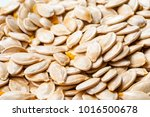 group raw pumpkin seeds as... | Shutterstock . vector #1016500678