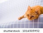 cute red cat   Shutterstock . vector #1016505952