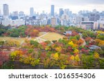 beautiful landscape with autumn ... | Shutterstock . vector #1016554306