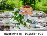 sweet yoghurt cake with berries ... | Shutterstock . vector #1016554606