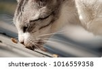 street cat as background   the... | Shutterstock . vector #1016559358