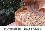raw coffee bean form farm | Shutterstock . vector #1016573398