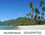 tamae beach in moore s  french... | Shutterstock . vector #1016599702