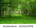 Open Area Among Trees