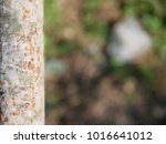 Small photo of Selective focus of rusty, rusted, metal bar on blurry ground and green leaves background
