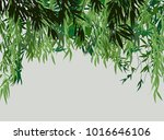 illustration with green bamboo... | Shutterstock .eps vector #1016646106