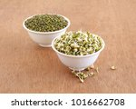 sprouted moong  mung or green... | Shutterstock . vector #1016662708
