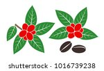 coffee plant. isolated coffee... | Shutterstock .eps vector #1016739238
