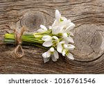 beautiful bouquet of snowdrops | Shutterstock . vector #1016761546