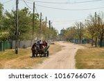 letea  danube delta  romania ... | Shutterstock . vector #1016766076