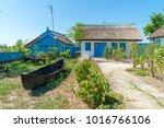 letea  danube delta  romania ... | Shutterstock . vector #1016766106