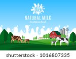 vector milk illustration.... | Shutterstock .eps vector #1016807335