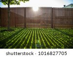 wooden fence and a path in the... | Shutterstock . vector #1016827705