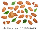 almonds with leaves isolated on ... | Shutterstock . vector #1016849695