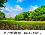 violet flowers drop on the...   Shutterstock . vector #1016854042