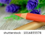 orange lip pencil with flowers... | Shutterstock . vector #1016855578