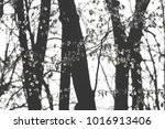green forest in the spring | Shutterstock . vector #1016913406
