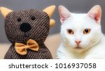 white cat with a decorative cat ... | Shutterstock . vector #1016937058