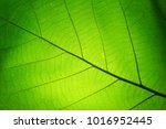 Leaf Texture Pattern For Spring ...