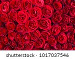 natural red roses background | Shutterstock . vector #1017037546