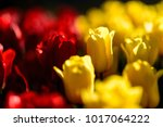 amazing nature concept of red... | Shutterstock . vector #1017064222