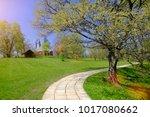 tree standing in the field ... | Shutterstock . vector #1017080662