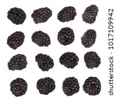 set of blackberries isolated | Shutterstock . vector #1017109942