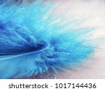 feathers. plumage. plumage of... | Shutterstock . vector #1017144436