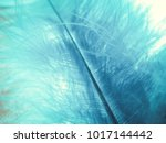 feathers. plumage. plumage of... | Shutterstock . vector #1017144442