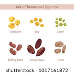 set of beans and legumes.... | Shutterstock .eps vector #1017161872