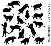 Stock vector set vector silhouettes of the cat different poses standing jumping and sitting black color 1017173362