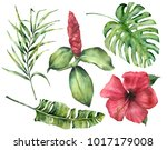 watercolor tropical flowers and ... | Shutterstock . vector #1017179008