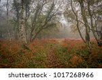 Autumn Colours In Woods On...