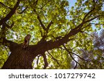 treetop  canopy  crown of the... | Shutterstock . vector #1017279742