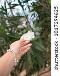 little flower in the hand   Shutterstock . vector #1017294625