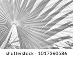 tropical palm foliage texture... | Shutterstock . vector #1017360586