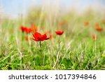 spring flowers blooming | Shutterstock . vector #1017394846