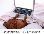dog using a laptop while lying... | Shutterstock . vector #1017410545