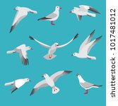 atlantic seagull in different... | Shutterstock .eps vector #1017481012