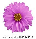 dahlia pink flower  on a white... | Shutterstock . vector #1017545512
