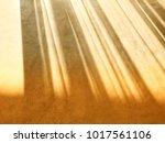 shadow of soft sunlight through ... | Shutterstock . vector #1017561106