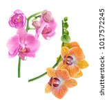watercolor orchids. pink and... | Shutterstock . vector #1017572245