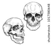 Skull Set  Skeleton Head...
