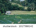 hill tribe villages and farm at ... | Shutterstock . vector #1017588142