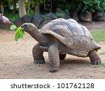 Stock photo big seychelles turtle eat la vanille reserve park mauritius 101762128